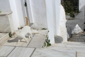 Greeter at the top of Mount Lycabettus.