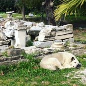 Sleeping among ruins.