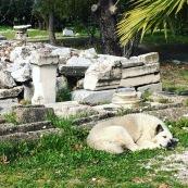 Sleeping among ruins.