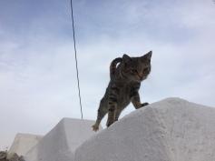 Exo Gonia cat stretch.